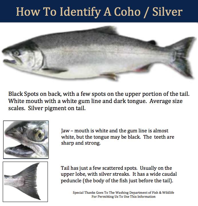 coho-identifier